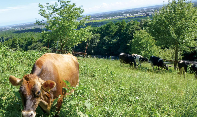 四日市市ふれあい牧場の写真