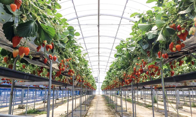 玉城ふれあい農園の写真