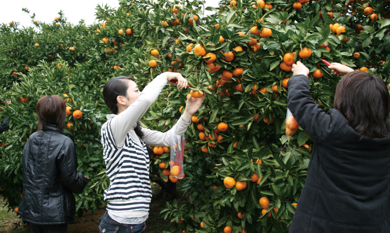 津市観光 みかん園の写真